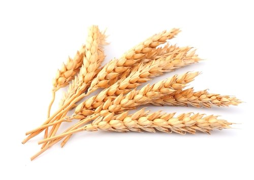 wheat-stalk.jpg