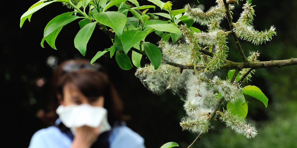 Allergy: bay leaf treatment for children and adults 37