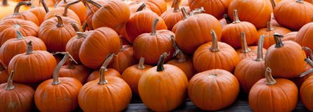 piles-pumpkins-background-11331310.jpg